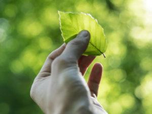 Green marketing ed eco-branding: sostenibilità ambientale nella tua azienda